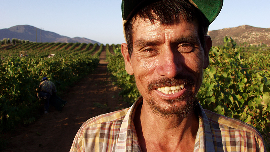 A Latino-American Agriculture Worker